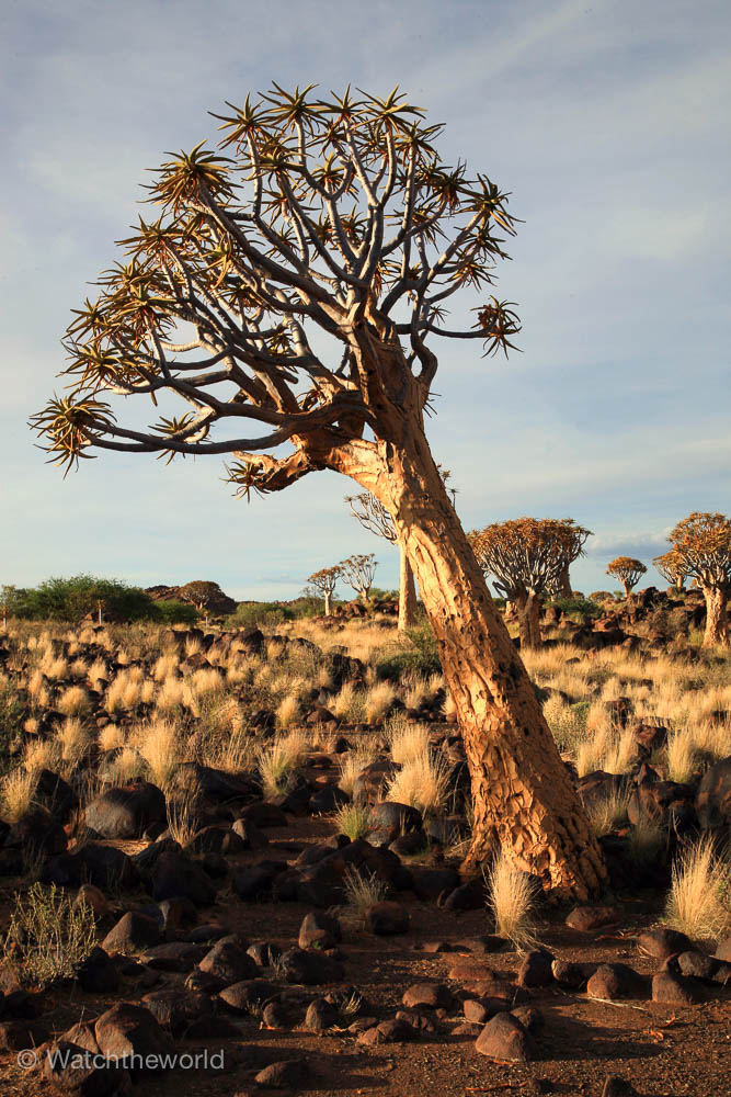 Photos of Quiver Tree Forest | Watchtheworld.net